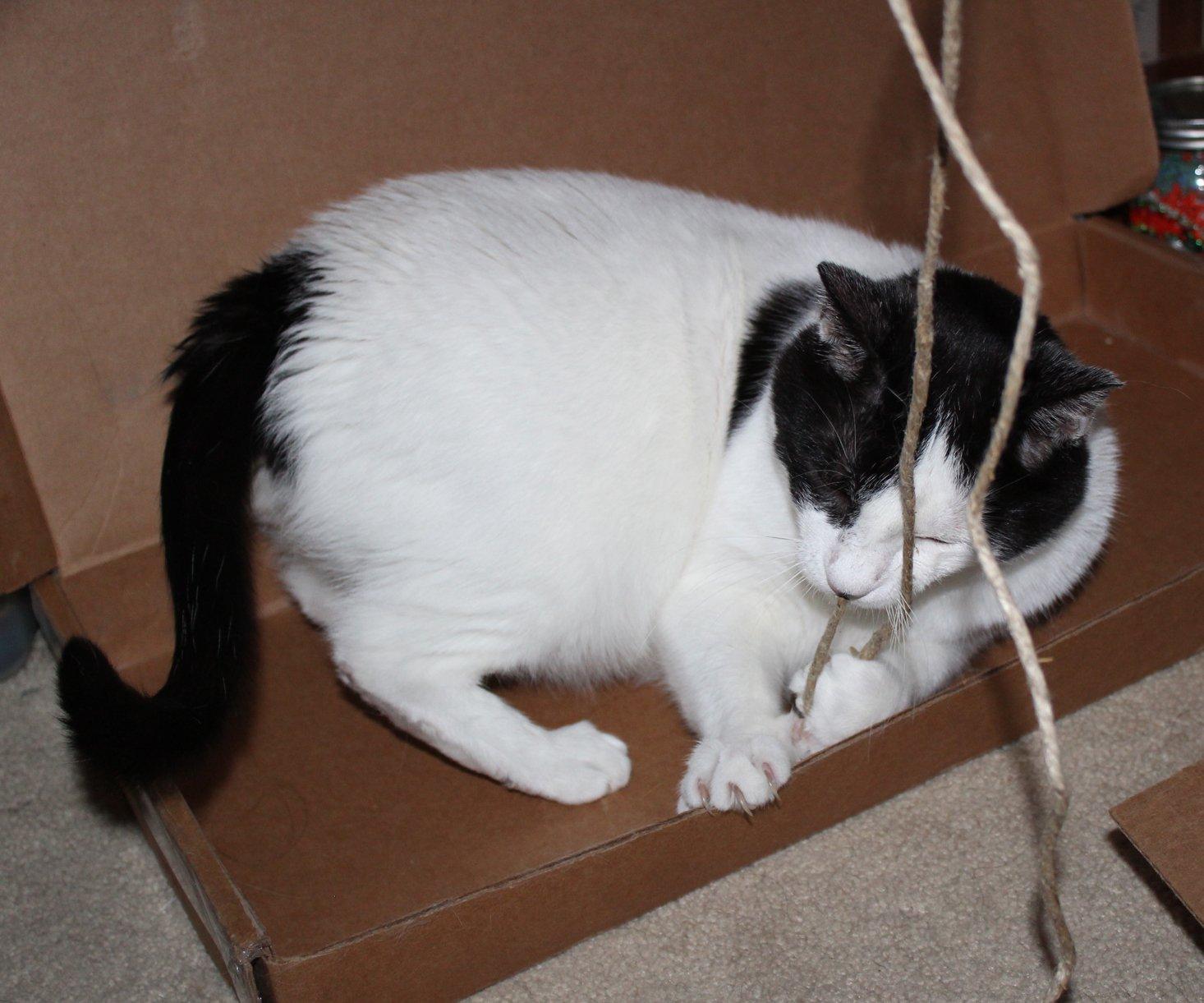 Vet Pet Box Cat October 2019 Angus 5